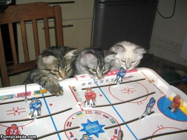 3 Cats watching a Table Top Hockey game