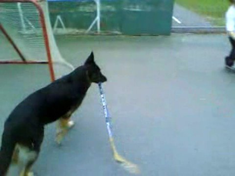 Hockey Dog playing Ball Hockey