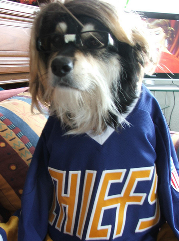 Hockey Dog with Chiefs Jersey on, and Hansen Glasses