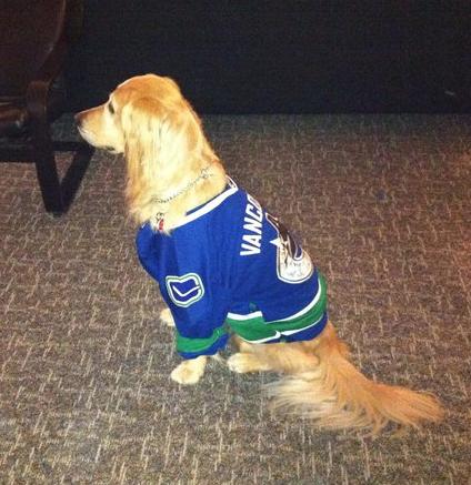 Hockey dog in a vancouver canucks jersey hockeygods png 424x437 Dog hockey  jerseys 286303729